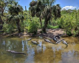 Things To Do in St. Augustine, Florida: St. Augustine Alligator Farm Zoological Park