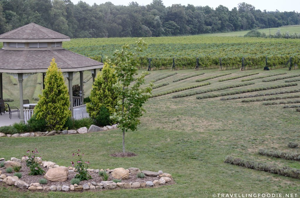 The beautiful farm of Bonnieheath Estate Lavender and Winery in Norfolk County, Ontario