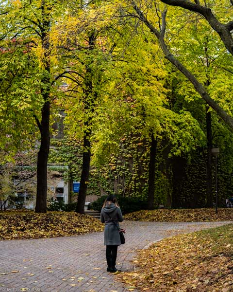 Lady in a pathway with fall trees in the backdrop