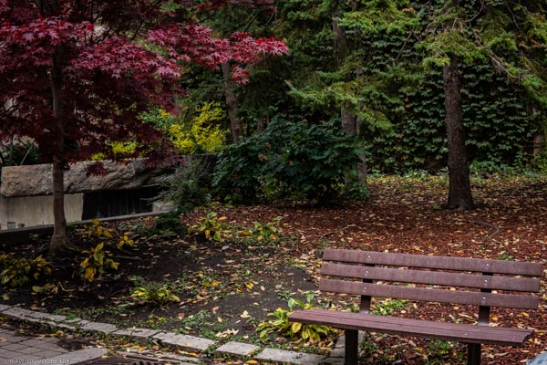 Park Bench during fall in downtown Toronto, Ontario