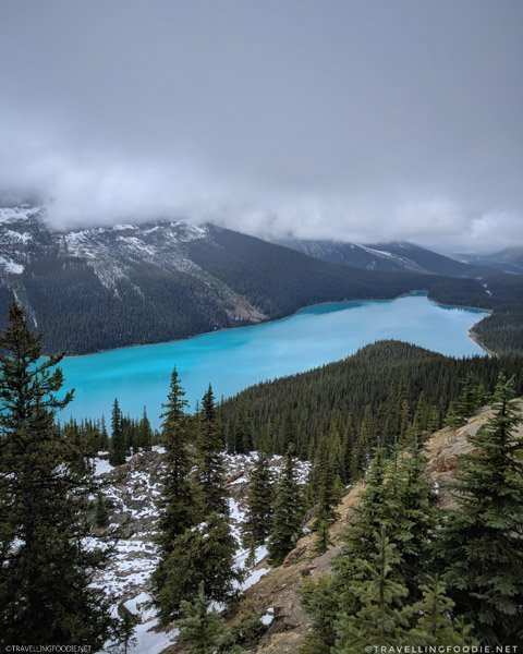 High viewpoint of Peyto Lake in Banff National Park, Alberta, Canada