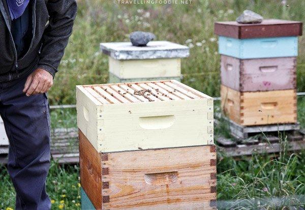 Honeybee Hives at Abbey Gardens, Haliburton, Ontario