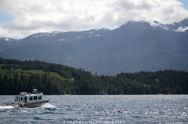 Water Taxi for BC Salmon Farmers Association Tour in Comox Valley, British Columbia
