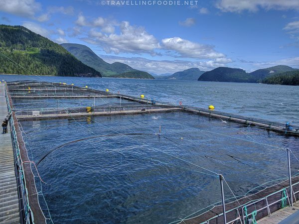 Salmon Pens with View at Hardwicke Island Salmon Farm in Comox Valley, British Columbia