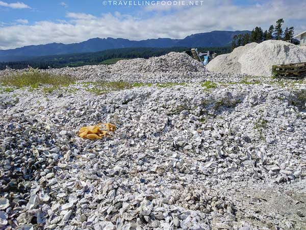 Empty Oyster Shells at Fanny Bay Oysters Plant in Comox Valley, British Columbia