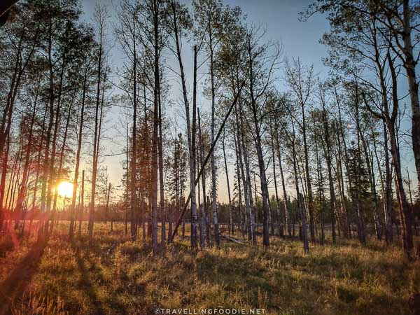 Sunset at Cedar Meadows Wilderness Tour in Timmins, Ontario