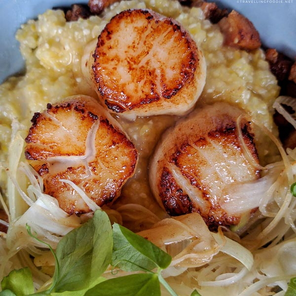 Scallops & Grits with Pork Belly from Field Guide in Halifax
