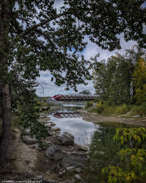 Framing Peace Bridge at Prince's Island Park in Calgary, Alberta