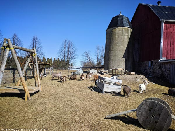 Haute Goat Farm in Port Hope, Ontario