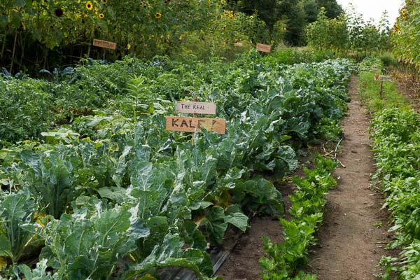 Vegetable Garden at Haute Goat Farm in Port Hope, Ontario
