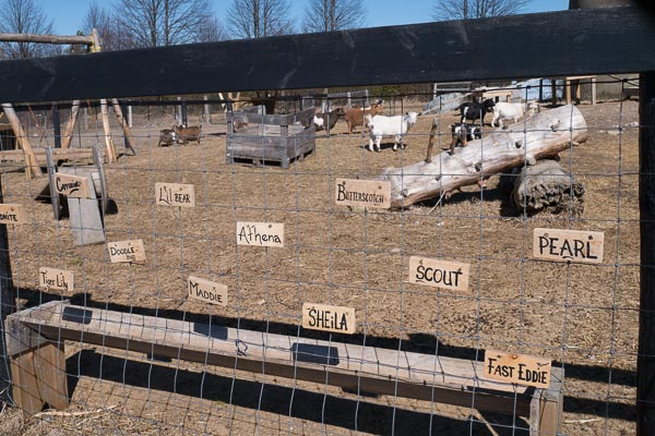 Name tags at Haute Goat Farm in Port Hope, Ontario