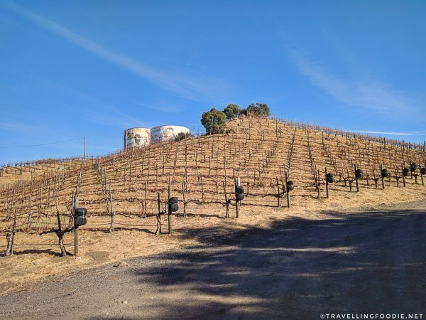 Vineyards at Malibu Wines in Conejo Valley, California