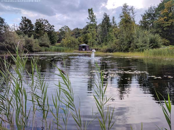 Pond with mini hut for massage at Spa Eastman in Eastern Townships, Quebec