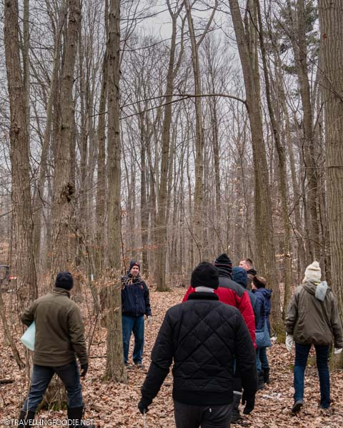 James teaching about maple trees at Richardson's Farm and Market in Dunnville, Haldimand County, Ontario