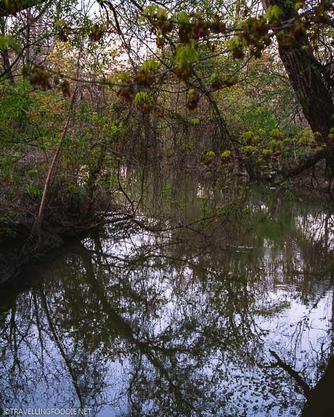 River at Alexandra Park in Strathroy, Ontario