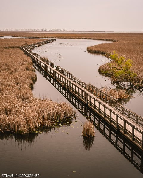 Marsh Boardwalk at Point Pelee National Park in Leamington, Ontario