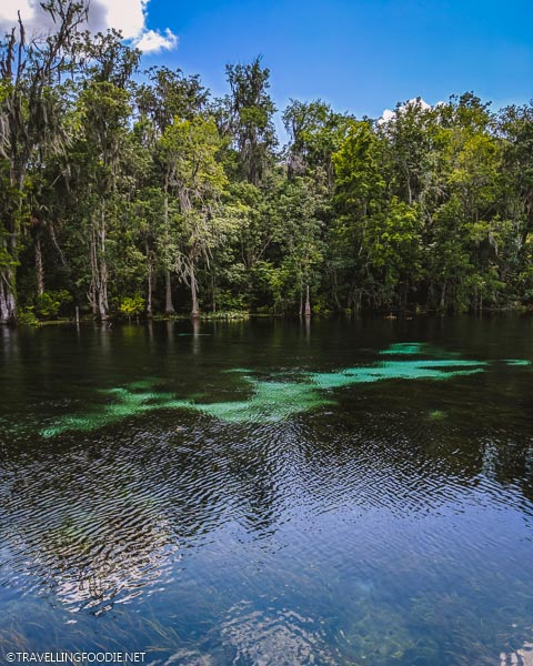 Silver River at Silver Springs State Park in Ocala, Florida