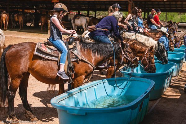 Horses drinking water with riders at Academy Riding Stables in Colorado Springs