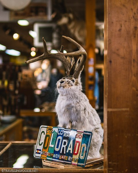 Jackalope Taxidermy at FM Light and Sons in Steamboat Springs