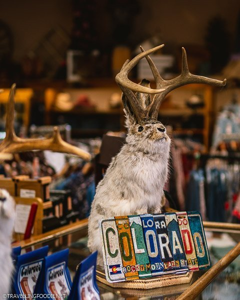 Jackalope Taxidermy with Colorado License Plate at FM Light and Sons