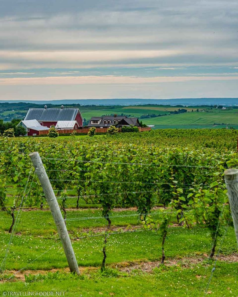 The Vineyards at Luckett Vineyards in Wolfville, Nova Scotia