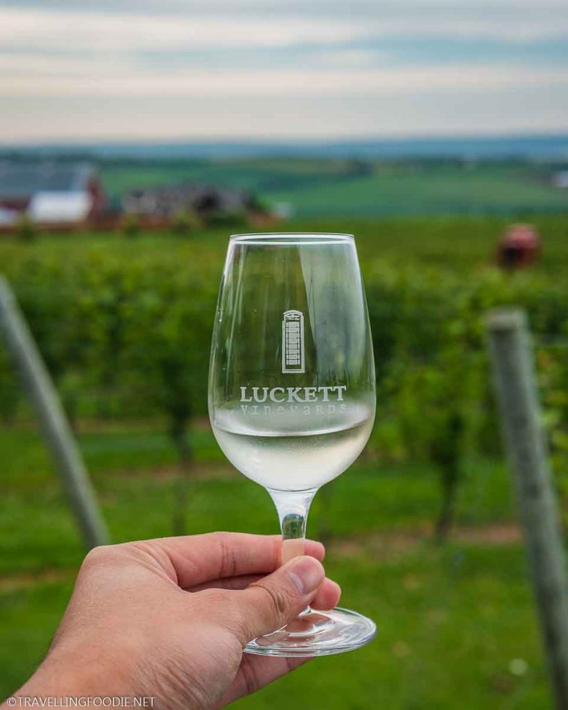 Holding Wine Glass in the Vineyards at Luckett Vineyards in Wolfville, Nova Scotia