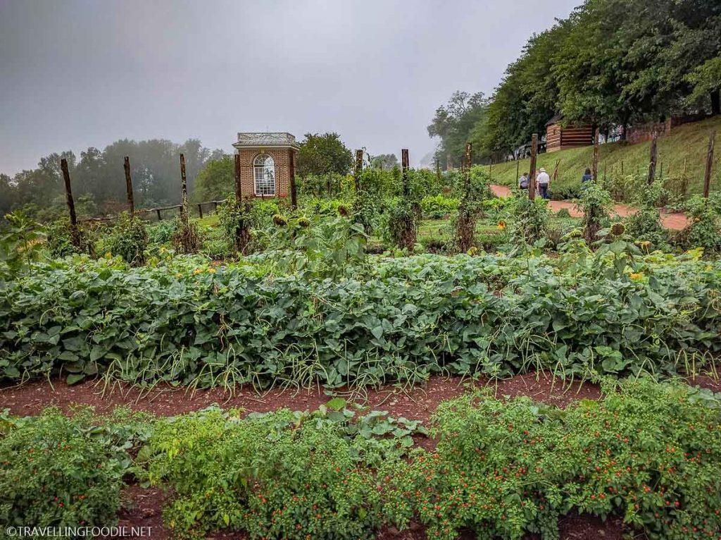 Monticello Garden Plants in Charlottesville, Virginia