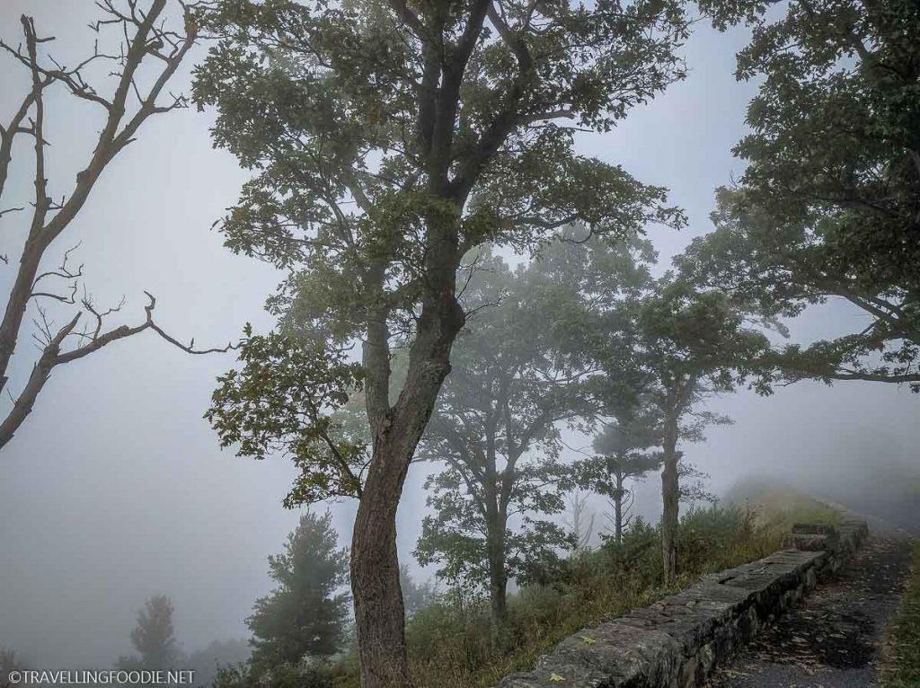 Foggy Trees at Shenandoah National Park, Virginia