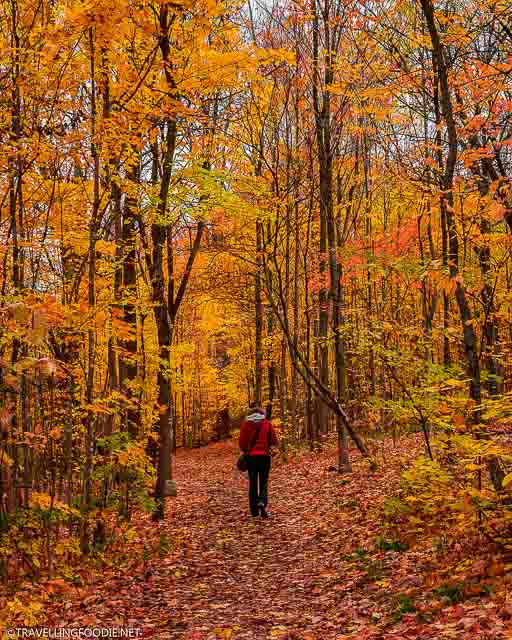 Lady with red jacket standing with fall foliage at TJ Dolan Natural Area in Stratford, Ontario