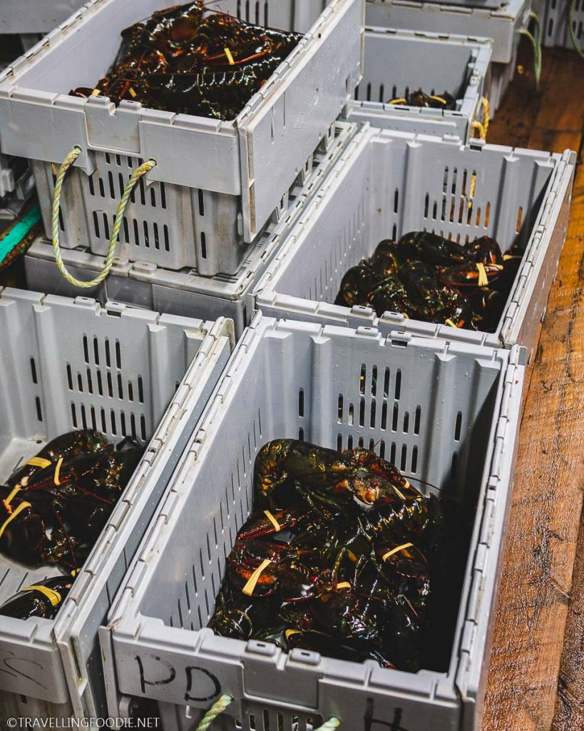Crates of Nova Scotia Lobster at Ryer's Lobster Pound in Indian Harbour