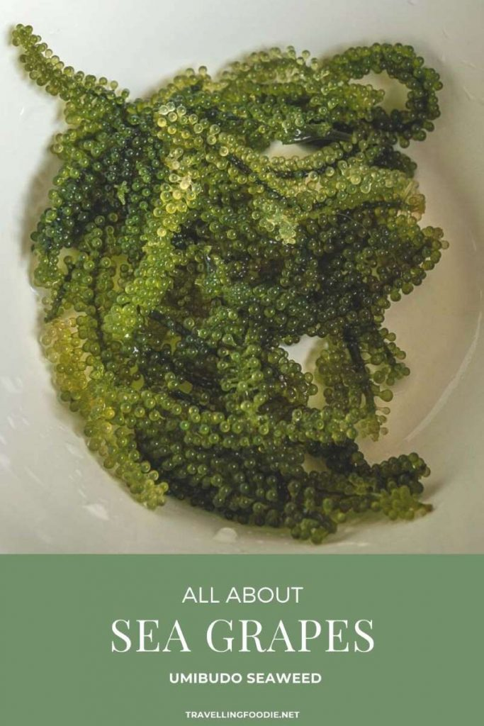 Umubido Seaweed - All About Sea Grapes on TravellingFoodie.net