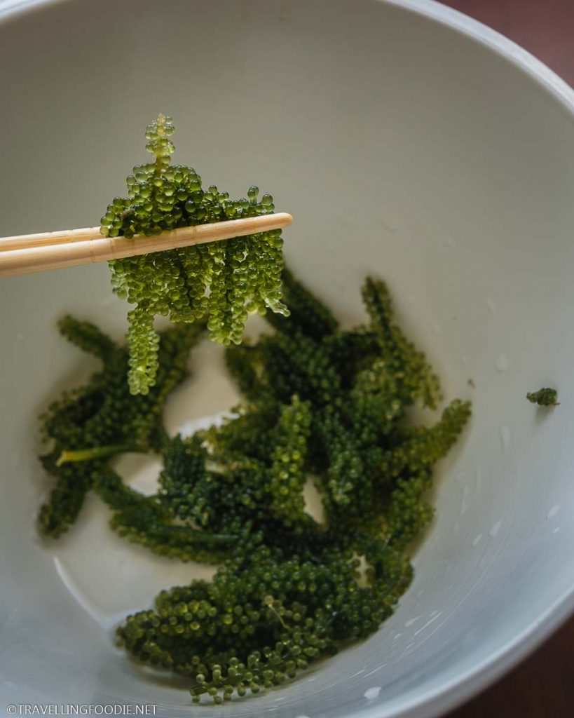 Holding Sea Grapes with chopsticks